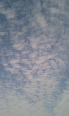 梅雨前のウロコ雲